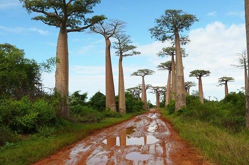 [Imagen: 261_Madagascar._Paisajes.JPG]